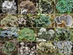 Lichen Metacommunity